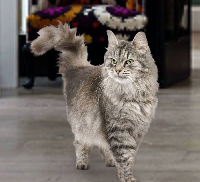 Why Does My Cat Shake His Tail?